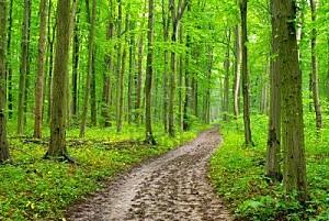 11525789-un-chemin-dans-la-foret-verte