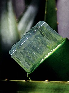 coupe-aloes