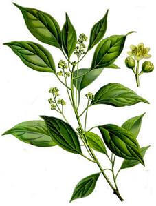 huile-essentielle-ravintsara-bio