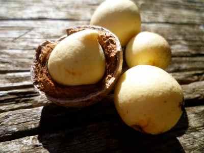 tamanu-noix-ouverte
